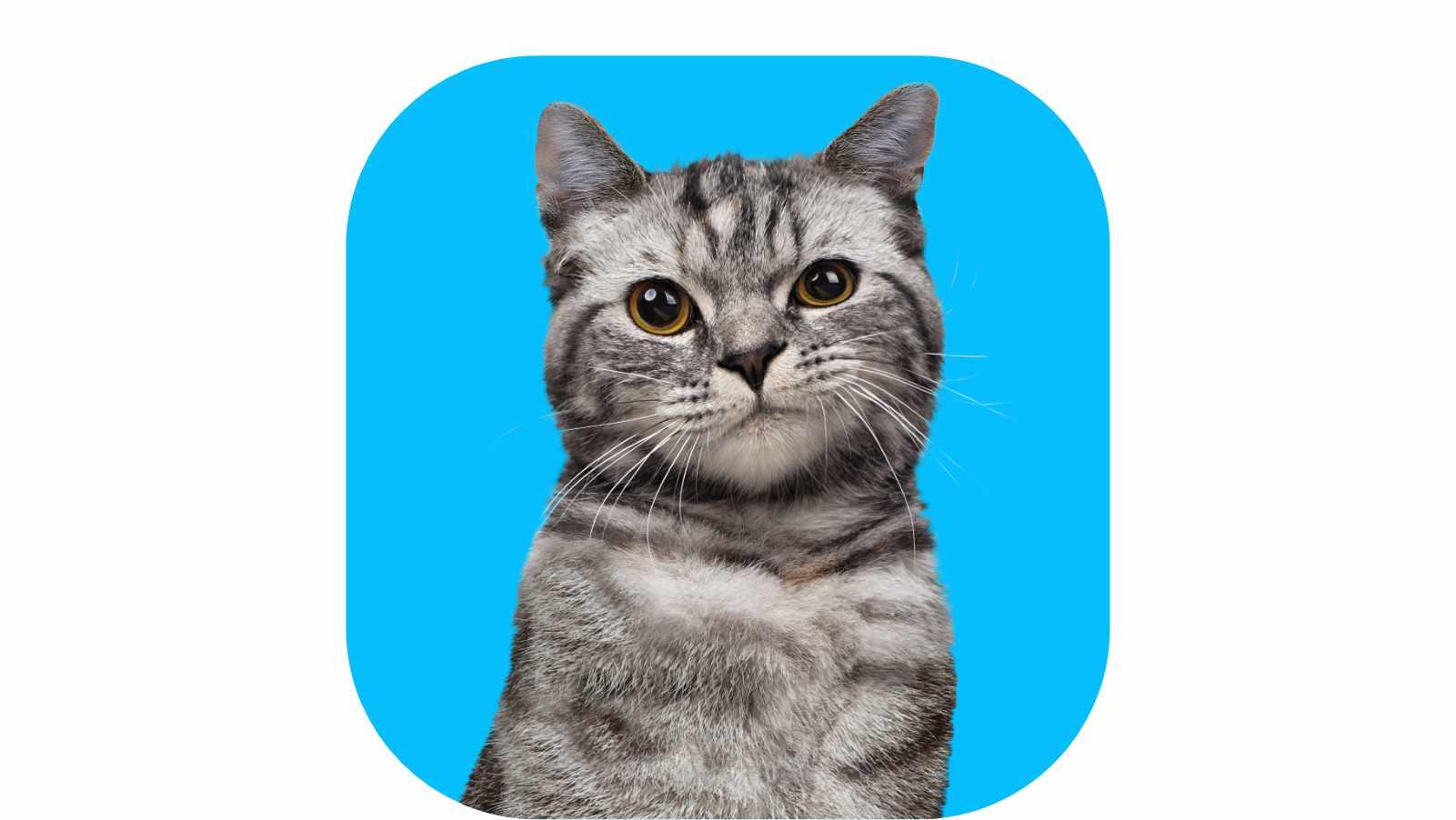 Katt som holder en FINN-annonse